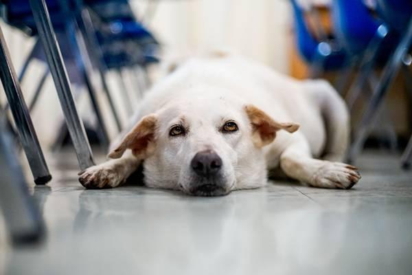 shutterstock_cachorro sala de aula
