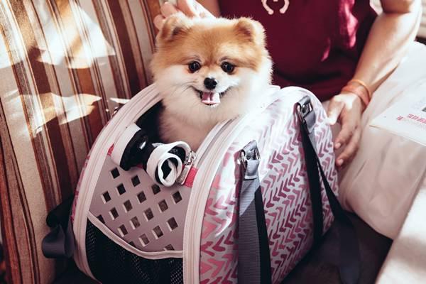 bolsa cachorro 4