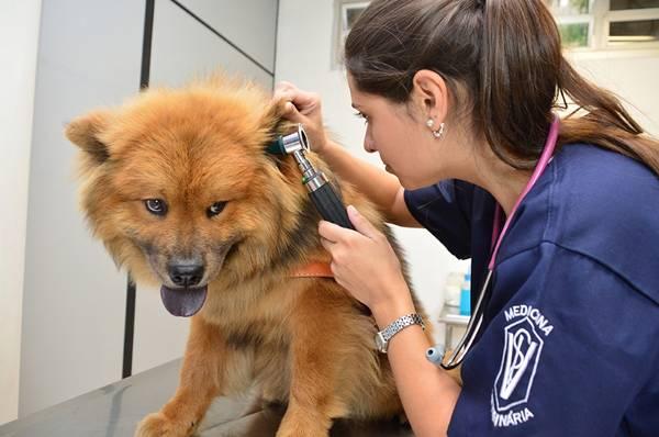 cachorro vet veterinaria UNG