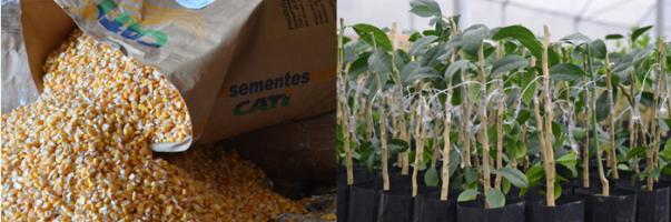 mudas e sementes