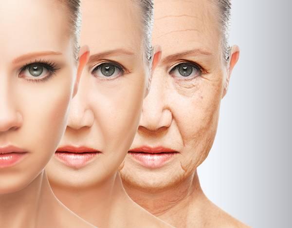 rejuvenescimento envelhecimento.jpg