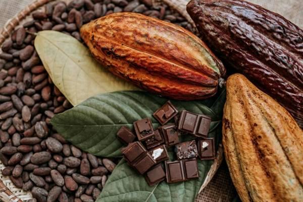 chocolate cacau