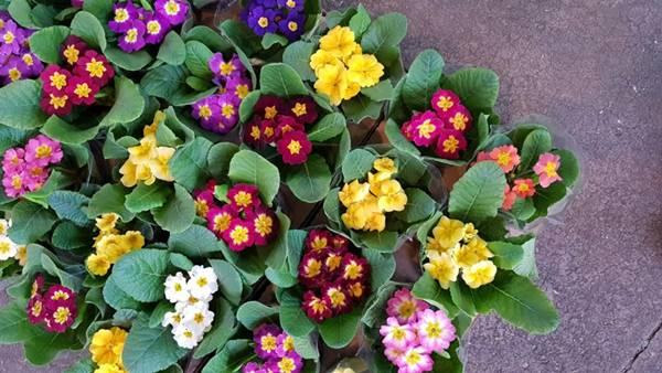 ceagesp flores.jpg