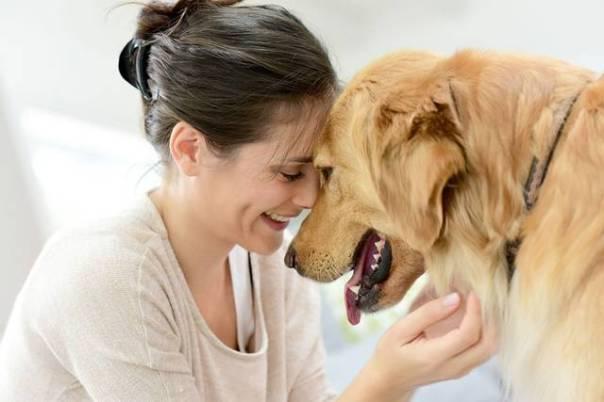 mulher e cachorro golden