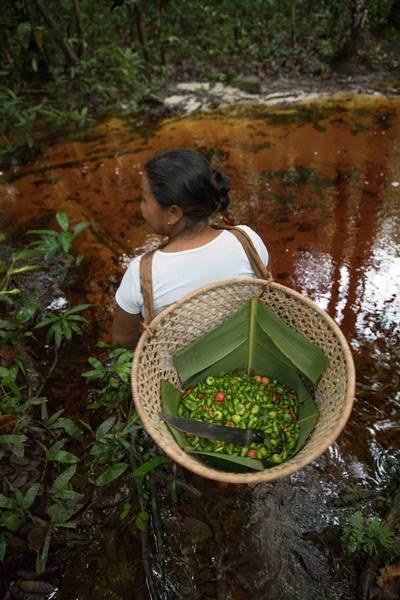 pimentas frescas carol quintanilha