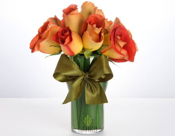 rosa leonidas.jpg