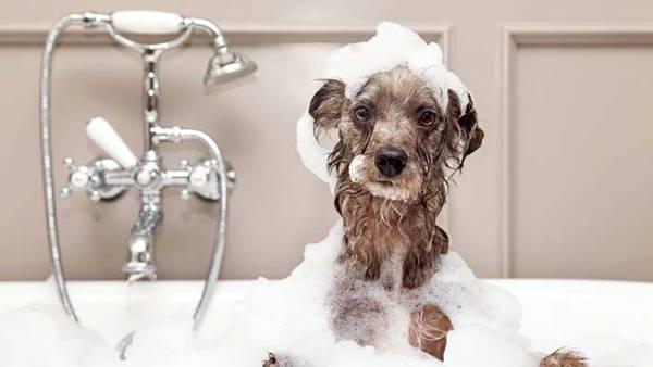 cachorro banho produtos_pets
