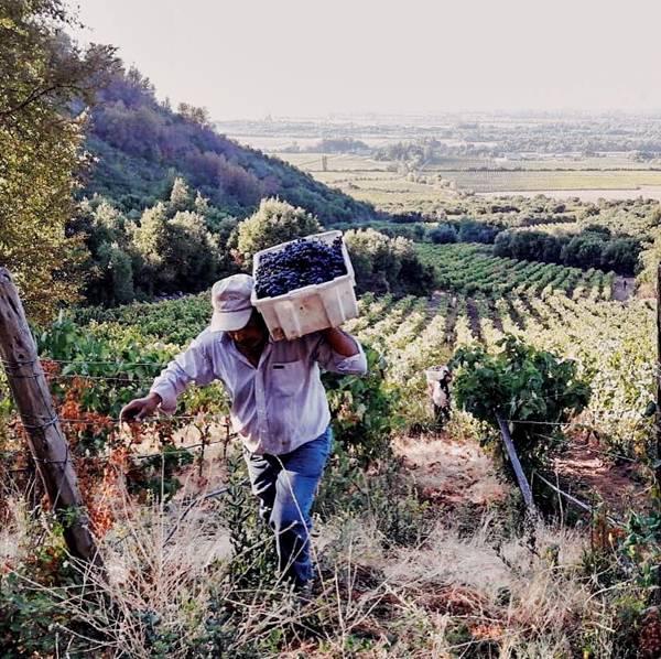 vinicolas_credito divulgacao.jpg