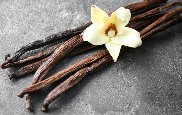 Vanilla sticks and flower on grey background