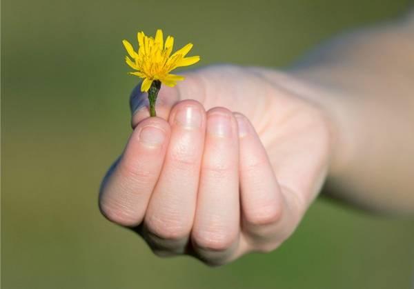 mão flor gratidao pixabay
