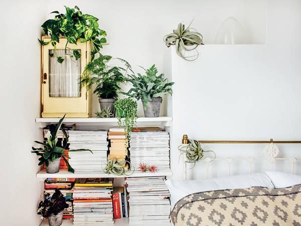 Decor plantas 2