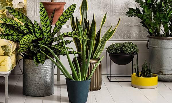 Decor plantas