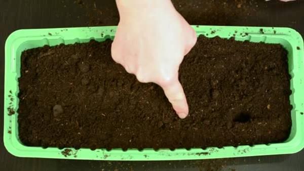 depositphotos_plantando sementes 2
