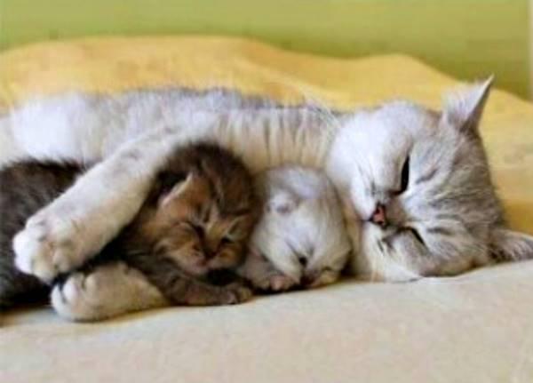 gata dormindo com filhotes