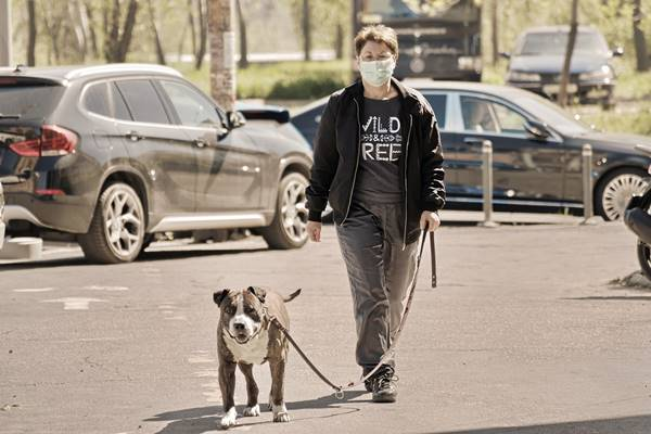 mulher mascara cachorro passeio pixabay silviu costin