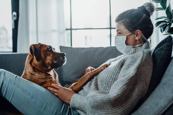 mulher sofá cachorro mascara
