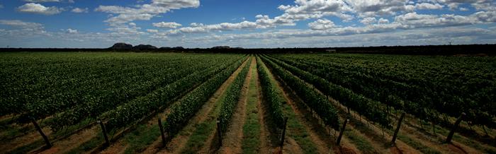 vinicola terra nova