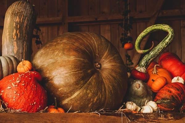 legumes aboboras