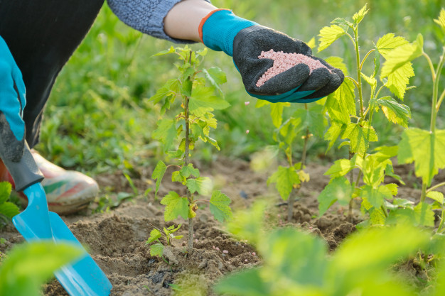 mulher fertilizando jardim plantas freepik
