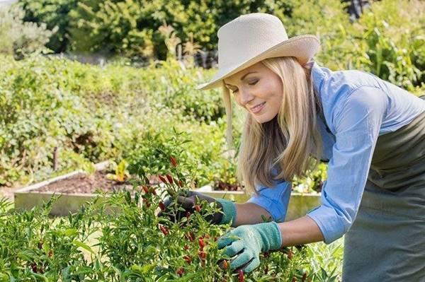 mulher podando plantas jardim poda leek garden