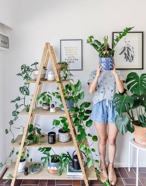 Plantas_Ornamentais (002)