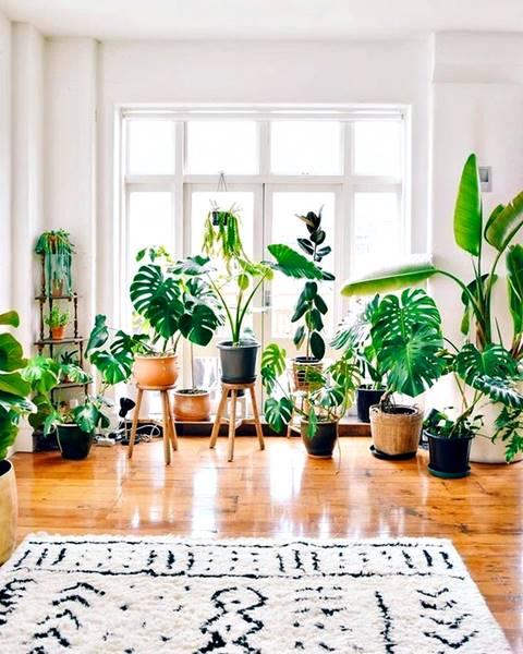 Plantas_Ornamentais_2 (002)